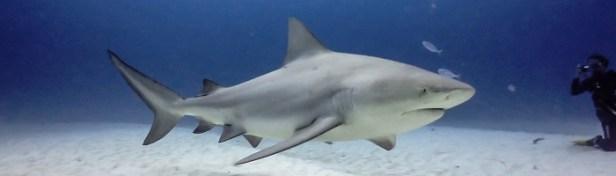 Les requins les plus dangereux du monde 3