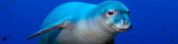 Animaux marins en danger d'extinction 7