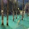 Forêts insolites