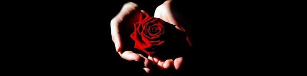 Beaux messages sur les roses