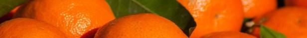 Fruits saison hiver