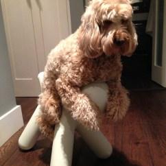 Modern White Chair A For My Mother Activities Kindergarten Magis Puppy | Miss Darcy's Adventures