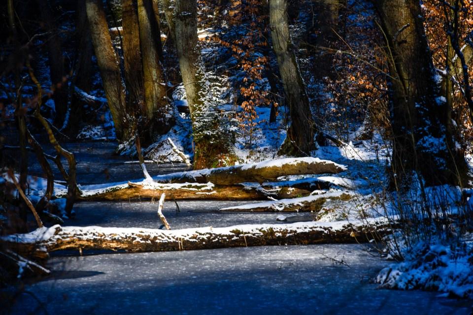 Waldvergnügen pur im Naturpark Barnim Wandern in Brandenburg im Barnimer Land - ein Spaziergang