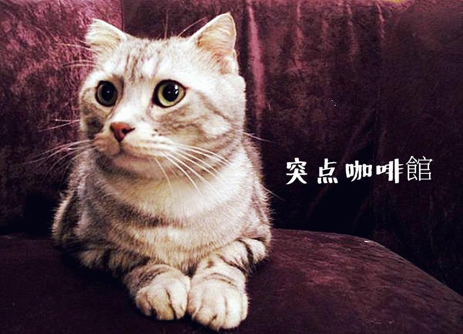 桃園中壢美食   突点咖啡館 有貓咪作陪的歐式咖啡館