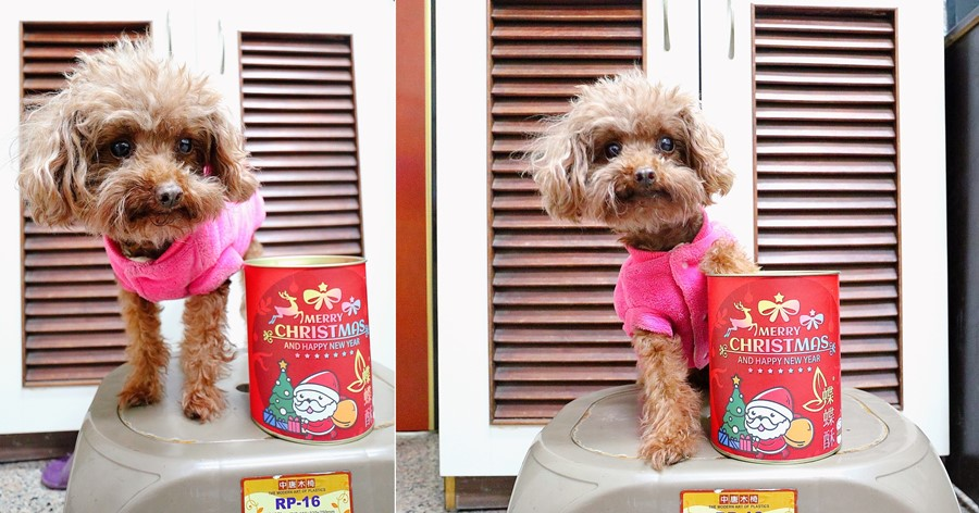 團購美食推薦【38熊蝶蝶酥】耶誕節送禮交換禮物好適合!聖誕節包裝超可愛!台北伴手禮!