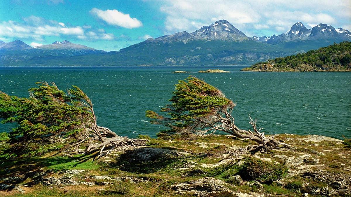 Nothofagus, Puerto Harberton, Tierra del Fuego, Argentina