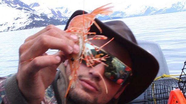 Banana sized shrimp