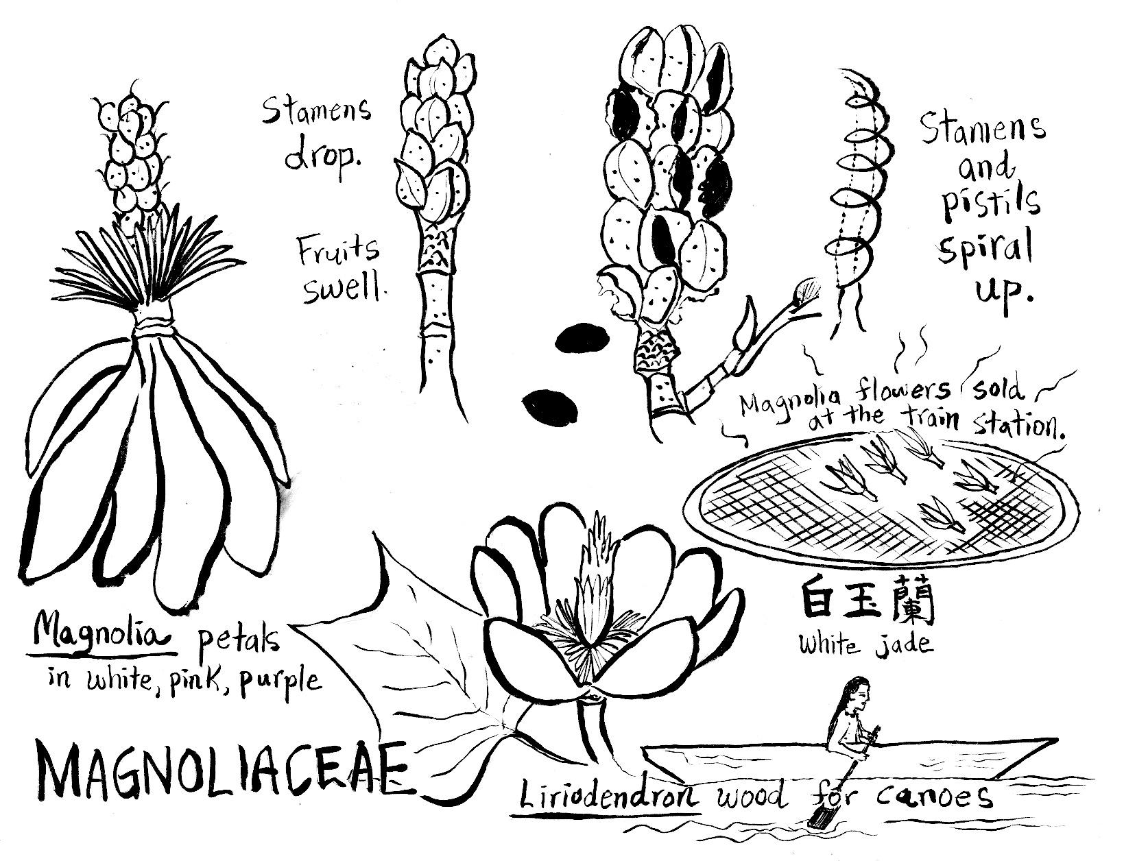 53 Plants Parts