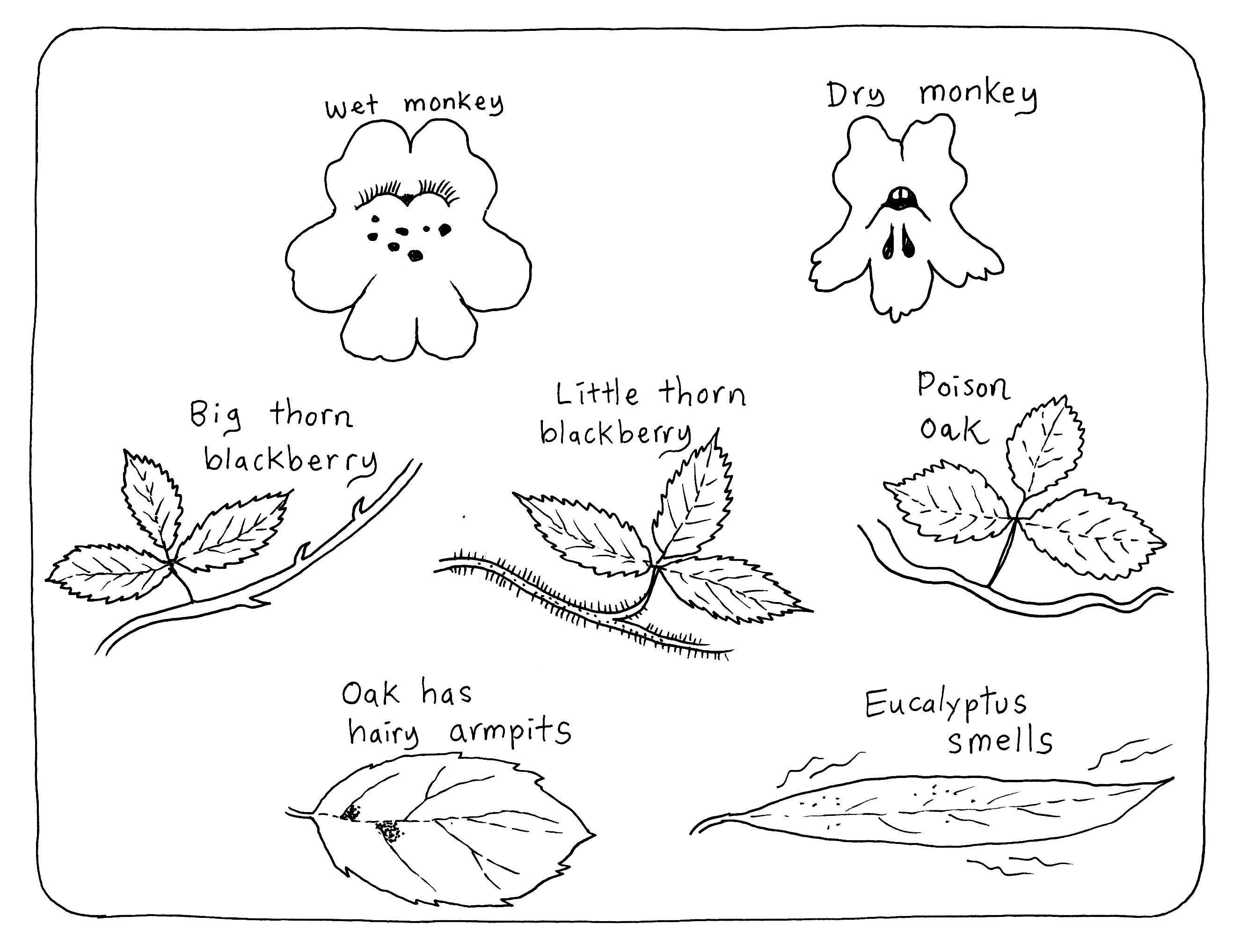 Rainforest Plants Drawings