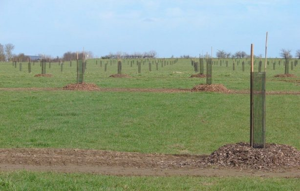 Agroforesterie intraparcellaire