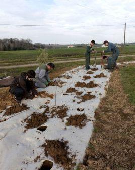 Plantation de boisements et haies bocagères
