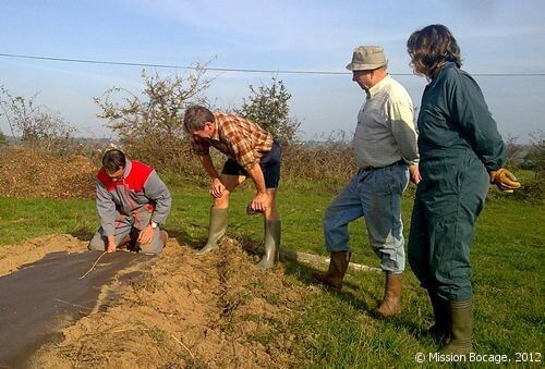 Bilan plantations arbre champêtre haie agroforesterie