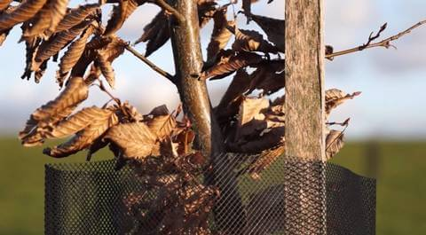 arbre agroforesterie