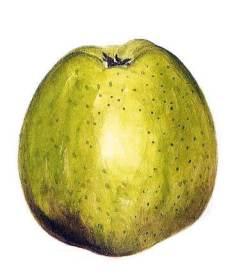 bonne hotture pomme anjou