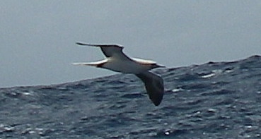 20-waves-can-be-sea-birds-friends-because-as-the-bird-flies-closly-to-the-waters-surface-the-bird-can-fly-almost-effortlesly