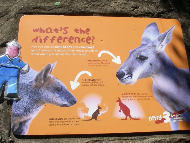 58.1.Flat Mr. Davis read about the difference between a wallaby and a kangaroo