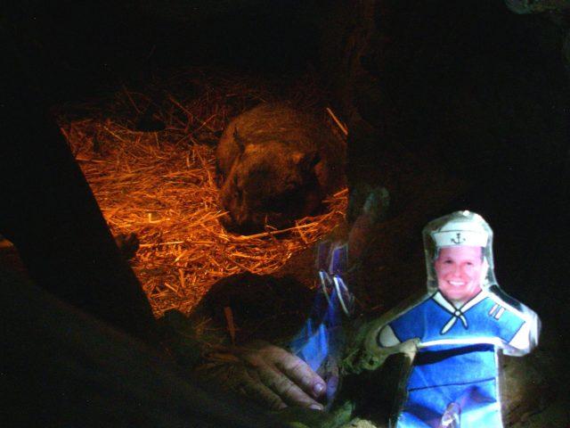 60.9.1. Flat Mr. Davis saw a snoozing wombat at the Toranga Zoo in Sydney