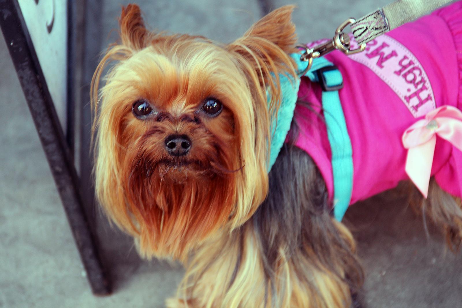 A dog on Mission Street.