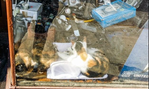 SNAP: Window Shopping