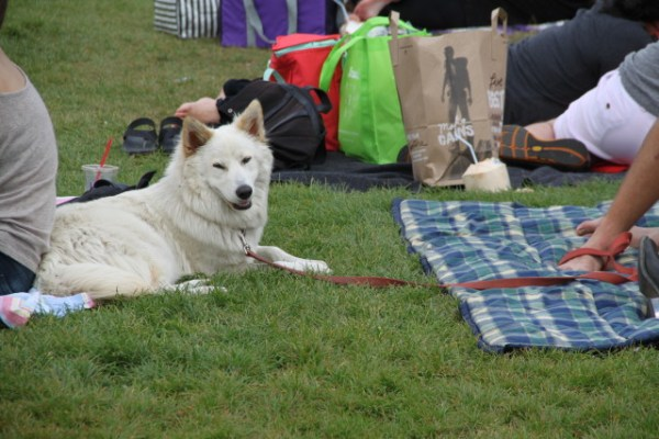 Despite the event, there were more dogs than cats at Dolores Park, though most were as relaxed about the felines as this one here. Photo by Joe Rivano Barros.