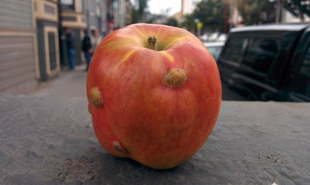 Warty German Apples and Youth Literature