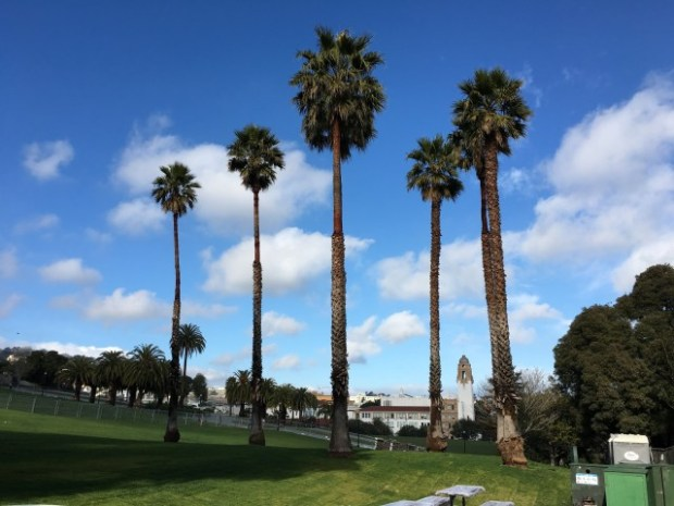 Palm trees on the south side. Photo: Joe Rivano Barros.