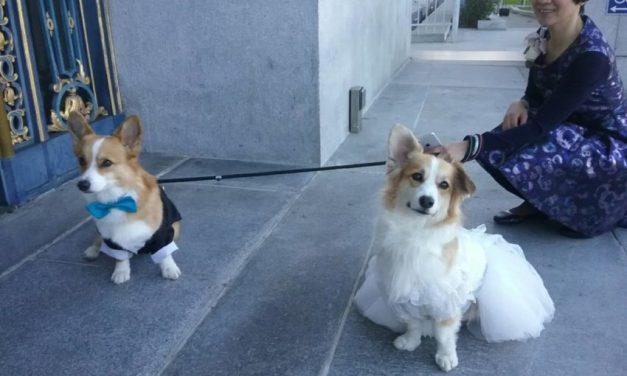 SNAP: Corgis wed — speak now or forever hold your peace