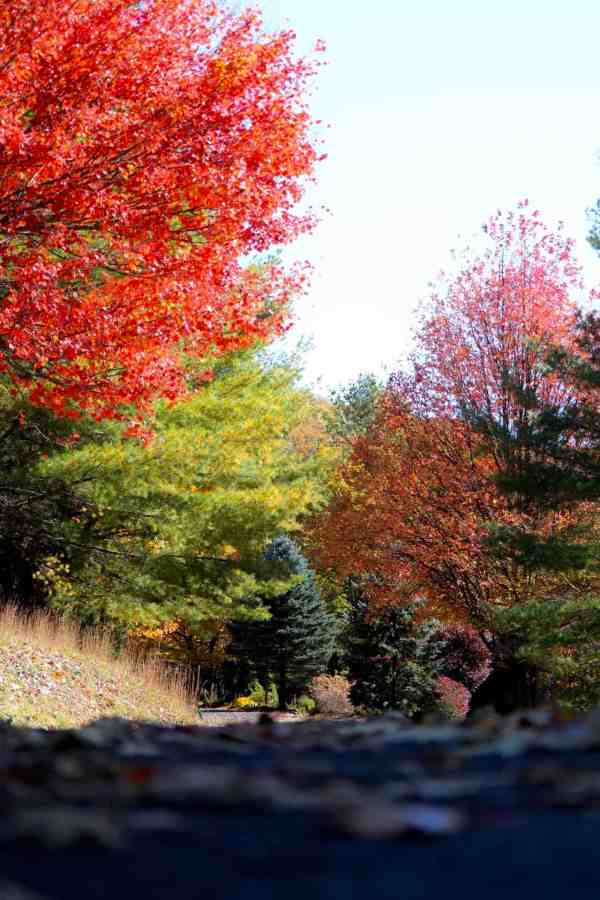 A photo of trees with red, green, and yellow leaves