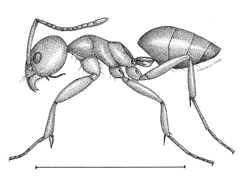 Insect Art Drawing