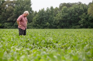 Jerry Slocum, farmer and president of North Mississippi Grain Company, takes a look at his soy bean crops in one of his fields in Coldwater, Miss. Wednesday, June 20, 2018. During the recent trade war between the United States and its closest trading partners, China imposed 25 percent tariffs on soybeans, corn and beef.