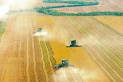 Rice Harvest — 2015