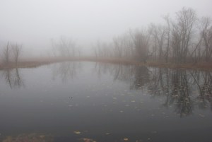 Foggy day in the backwaters near La Crescent MN