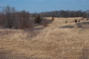 Pine Bend