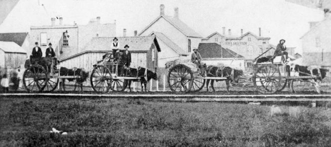 Oxcarts (Courtesy of Stearns History Museum, St. Cloud, MN)