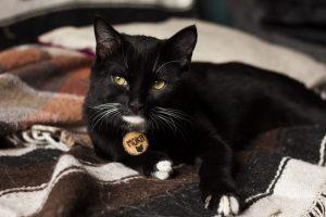 Moka, chat de l'atelier de La lettre aux ours - Missive to Bears, artisanat écologique français en Normandie