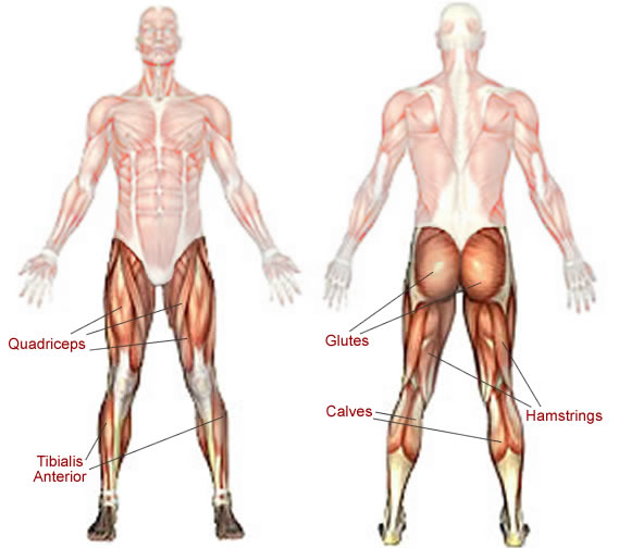 Stretching Tips ; Inner Thigh + (Iliotibial band) ITB ...