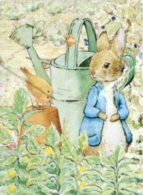 Peter rabbit potter
