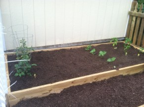 tomatoes, green beans, peppers (5/30)