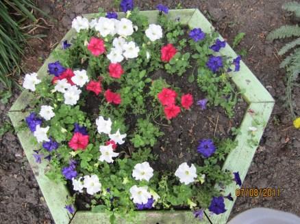 Garden update 005