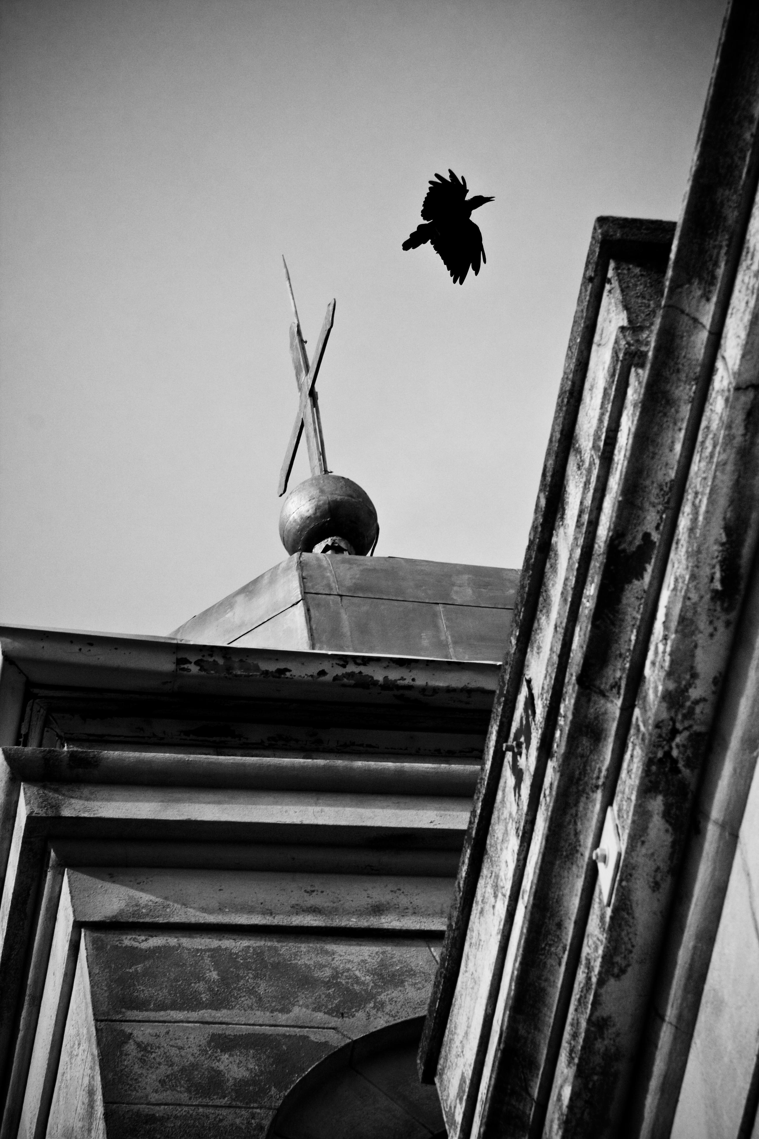 crow 1 bw