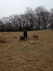 emily hayward, dog trainer, women's appreciation series, dog training in the field