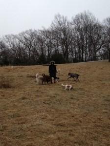 emily hayward, dog trainer, women's appreciation series, dog training in the field