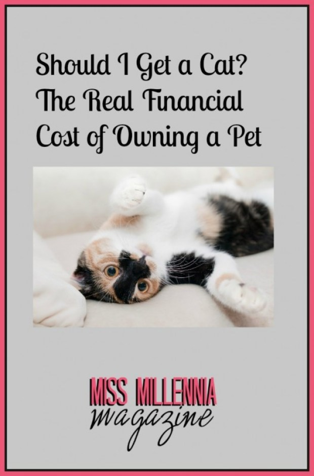 Should I Get a Cat The Real Financial Cost of Owning a Pet