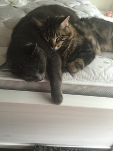 two cats cuddling on a bed