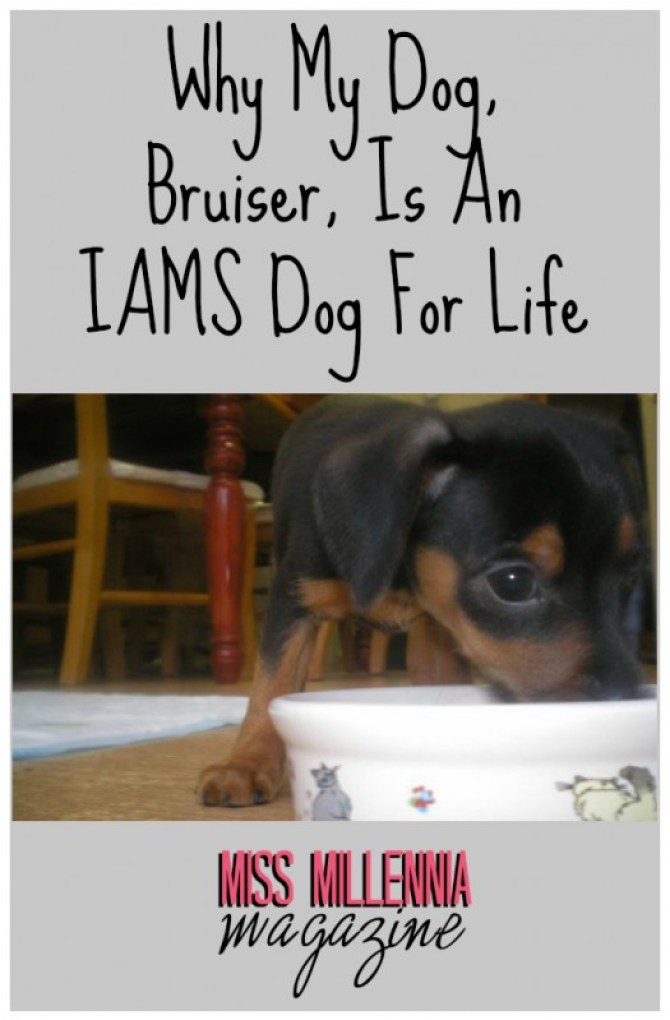 Why My Dog, Bruiser, Is An IAMS Dog For Life