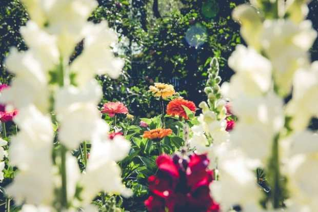 Flower garden with closeup on white flowers