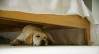 Why Do Dogs Sleep Under Beds? - Miss Molly Says