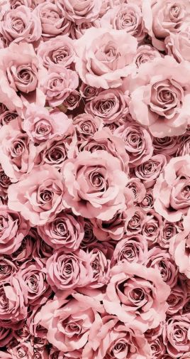 An army of pink roses fir for the most glamourous of loves