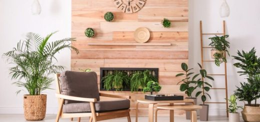 Best indoor house plants for stress & anxiety relief