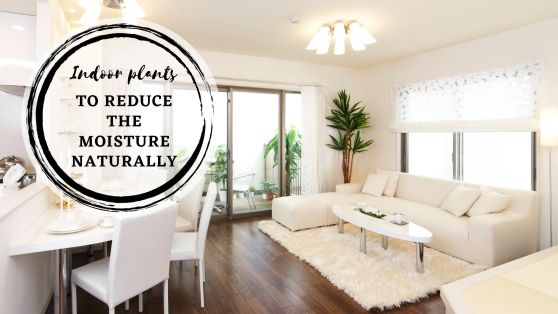 Best indoor plants to reduce humidity naturally